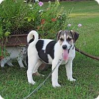 Adopt A Pet :: LUCAS - Hartford, CT
