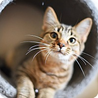 Adopt A Pet :: Ellie - Xenia, OH