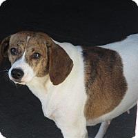Adopt A Pet :: Etta - Liberty Center, OH