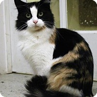 Domestic Mediumhair Cat for adoption in West Des Moines, Iowa - Edith