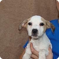Adopt A Pet :: Otto - Oviedo, FL