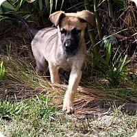 Adopt A Pet :: Kyra - Irvine, CA