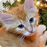 Adopt A Pet :: Butterscotch - Irvine, CA