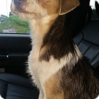 Adopt A Pet :: Daisey-6 Pounds - Battleboro, VT