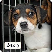 Adopt A Pet :: Sadie S - Doylestown, PA