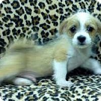 Adopt A Pet :: B.J. - Staunton, VA