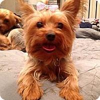Adopt A Pet :: Roxy - Carmine, TX