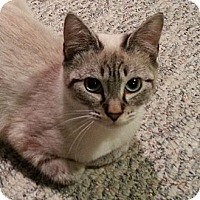 Adopt A Pet :: Beatrice - Portland, OR