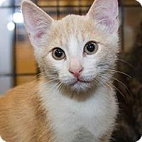 Adopt A Pet :: Bowie - Irvine, CA