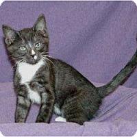 Adopt A Pet :: Clover - Sacramento, CA