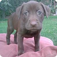 Adopt A Pet :: LILLY - Irvine, CA