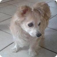 Adopt A Pet :: Ralf - Gilbert, AZ