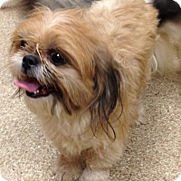 Adopt A Pet :: Squirt - Fairview Heights, IL