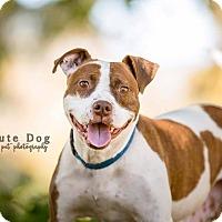 Adopt A Pet :: Queso - San Diego, CA