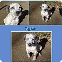 Adopt A Pet :: Ryker Adoption pending - Manchester, CT