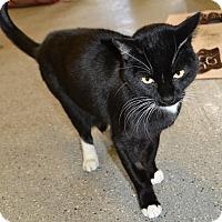 Adopt A Pet :: Loki - Michigan City, IN