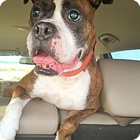 Adopt A Pet :: Happy - Wilmington, NC