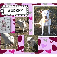 Adopt A Pet :: Audrey - Graford, TX