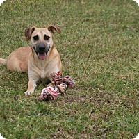 Adopt A Pet :: Kya - Lufkin, TX