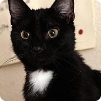 Adopt A Pet :: Snuffy - St. Louis, MO