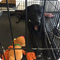 Adopt A Pet :: Charlie - Humble, TX