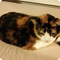 Adopt A Pet :: MollyCP - Carlisle, PA