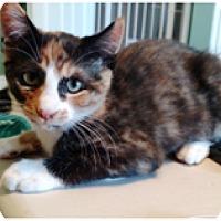 Adopt A Pet :: Merryweather - Orange, CA