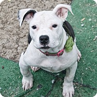 Adopt A Pet :: Delilah - West Allis, WI