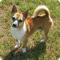 Adopt A Pet :: Abner - Umatilla, FL