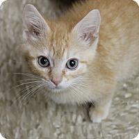 Adopt A Pet :: Tarzan - Medina, OH
