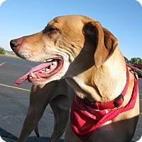 Adopt A Pet :: Homer - Salem, OR
