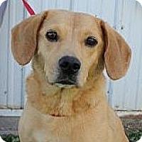 Adopt A Pet :: Lucy - Sparta, NJ