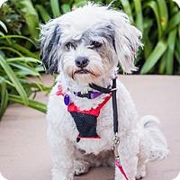 Adopt A Pet :: Michi D4173 - Fremont, CA