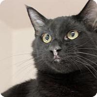 Adopt A Pet :: Miller - Red Bluff, CA