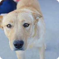 Adopt A Pet :: Yvette - Salt Lake City, UT