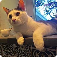 Adopt A Pet :: Angel - Philadelphia, PA