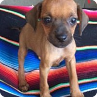 Adopt A Pet :: Holly - Lindale, TX