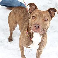 Adopt A Pet :: Precious Peggy - Greensboro, NC