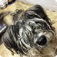 Adopt A Pet :: Kinley - Oswego, IL