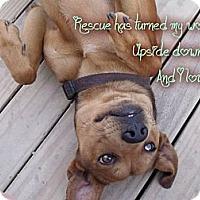 Adopt A Pet :: Buck - Hancock, MI
