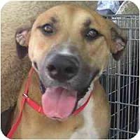 Adopt A Pet :: Steffi - Phoenix, AZ