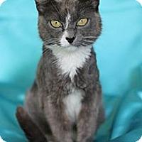 Adopt A Pet :: Wavy - Alexandria, VA