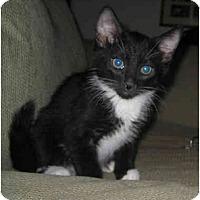 Adopt A Pet :: Huxley - Davis, CA