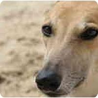 Adopt A Pet :: Mac - St Petersburg, FL