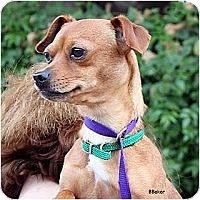 Adopt A Pet :: Zola - Santa Barbara, CA