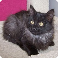 Adopt A Pet :: K-Samples3-Little Bear - Colorado Springs, CO
