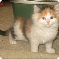 Adopt A Pet :: Winkie - Acme, PA