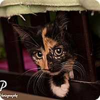 Adopt A Pet :: Barbra - Fountain Hills, AZ