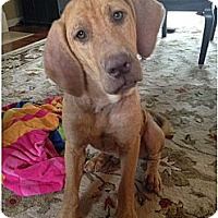 Adopt A Pet :: Lois Lane - Cumming, GA