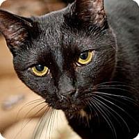 Adopt A Pet :: Magnum - Havana, FL